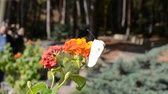 padrão floral : Butterfly on flowers