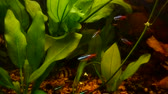 exotismo : Plants and fishes in an aquarium.