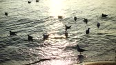 pairar : Seagulls in the sea. Slow motion. Vídeos