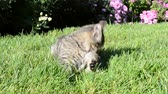 ушки : The cat washes on a green grass