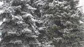 slippery : Snow falling Stock Footage