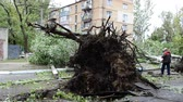 catastrophic : The tree which is pulled out with roots. The tree is dumped by a hurricane.