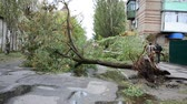 catastrophic : The blocked road the fallen trees. Gale. Houses and trees. Stock Footage