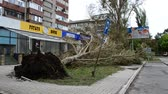 coeur brisè : Hurricane consequences in the city. The tumbled-down trees. Vidéos Libres De Droits