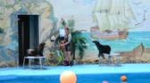hond : PARTENIT, UKRAINE - OCT 28: a dolphin in a show in a delphinarium. October 28, 2010 in Partenit, Ukraine Stockvideo