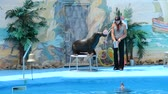 тварь : Performance of seals in a dolphinarium.