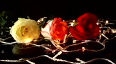 bloembollen : Roses and garlands on a black background.