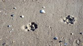 patas : Traces of a dog on the sand