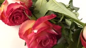 anniversaire mariage : Red roses on a white background. Vidéos Libres De Droits