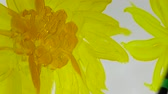 cartões : Draw sunflowers. Time lapse. Stock Footage