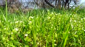 green area : Spring flowers in a grass.
