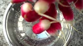 radis : Tossing of a garden radish in a colander. Slow motion.