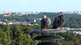 lâmpada elétrica : Pigeons sit on a lantern in the background of the city. Stock Footage