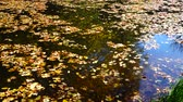 bright water : Autumn leaves and forest pond.