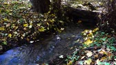 idílio : Stream in the woods. Autumn forest.