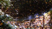 葉 : Stream in the woods. Autumn forest.