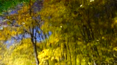пейзаж : Autumn leaves and forest pond.