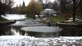 魔法の : Swans in a pond. Shooting in the winter. 動画素材