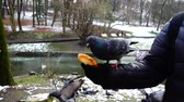 tohumlar : Feeding pigeons from your hands in the winter park. Slow motion.