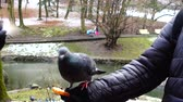 tohumlar : Feeding pigeons from your hands in the winter park.