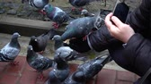 registra : Shooting of feeding of pigeons. Slow motion.
