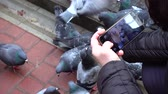 ornitologie : Shooting of feeding of pigeons.