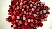 cowberry : Defrosting of a cranberry. Time lapse.