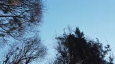 depressiv : Branches of trees against the background of the sky. Videos