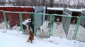 doghouse : Outdoors animal shelter in winter, the dogs are behind bars, the volunteer caring for the dogs on January 22, 2016 in Samara  Samara region  Russia