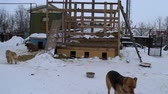 houseless : Outdoors animal shelter in winter, dogs eat from the bowl, they waiting for their new owners