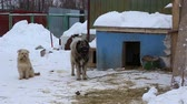 doghouse : Outdoors animal shelter in winter, the dogs are near a doghouse and waiting for their new owners
