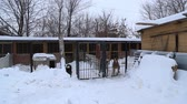 humane : Outdoors animal shelter in winter, the dogs are behind bars, they bark and waiting for their new owners Stock Footage