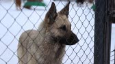 doghouse : Outdoors animal shelter in winter, the dogs are behind bars, they waiting for their new owners