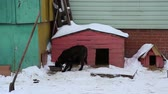 doghouse : Outdoors animal shelter in winter, dog eats from the bowl near doghouse, they waiting for their new owners