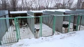 houseless : Outdoors animal shelter in winter, the dogs are behind bars, the dog misses his owner and waiting for new owners