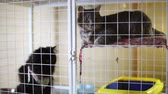 houseless : Animal shelter, cats are in cages waiting for their new owners Stock Footage