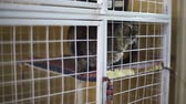 doghouse : Animal shelter, sad cat is in cage waiting for new owners Stock Footage