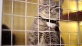 doghouse : Animal shelter, cats are in cages waiting for their new owners Stock Footage