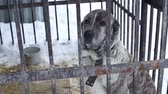 humane : Outdoors animal shelter in winter, the dogs are behind bars, the dog misses his owner and waiting for new owners