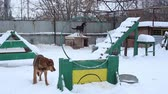 doghouse : Outdoors animal shelter in winter, dogs run on territory and waiting for their new owners