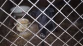 houseless : Outdoors animal shelter in winter, the dogs bark behind bars, they missing his owners and waiting for new owners Stock Footage