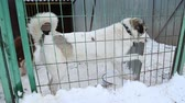 doghouse : Outdoors animal shelter in winter, the dogs are behind bars, the dog misses his owner and waiting for new owners