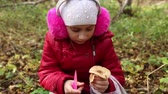 comestível : Girl picking mushrooms armillaria in the forest in autumn, she admires the mushroom, fallen yellow leaves lie on the ground