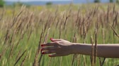 beatitude : Nice Full HD shots. Beautiful hand to girl touching grass