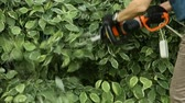 střih : Gardener cuts electric scissors bush in garden of dern variegated Dostupné videozáznamy