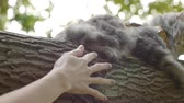 no people : Cat sits on tree and hands Stock Footage