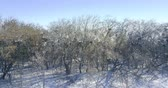 winter tree : Winter landscape at aerial view Stock Footage