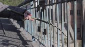 dzien dobry : girl walks and knocks with stick on the fence