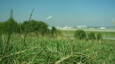 scene shows the environment of an airport with a starting plane, in the foreground some grass is in focus