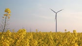 elements of the european regenerative energy mix - wind turbine and bio energy, a rape field